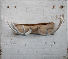 Naturally shed deer antler coat rack/jewelry holder/wall decoration. $140.00, via Etsy.