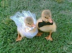 they're too  young to get married
