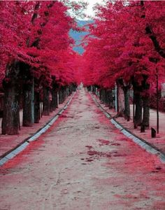 pink pink pink, tree, dream, color, path, pinkpinkpink, road, place, walk