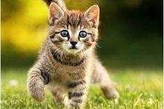 urocze koty! #kitten #cat #koty #tapetynapulpit #wallpapers