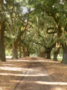 Savannah....such amazing trees