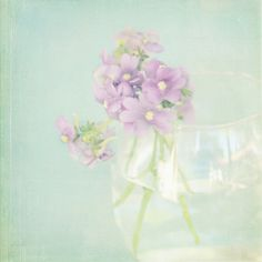 violets