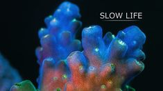 "Slow Life. ""Slow"" marine animals show their secret life under high magnification. Corals and sponges are very mobile creatures, but their mo..."