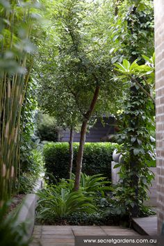 Contemporary Garden Design: Kensington | Secret Gardens of Sydney