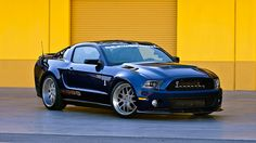 Mustan Shelby 1000