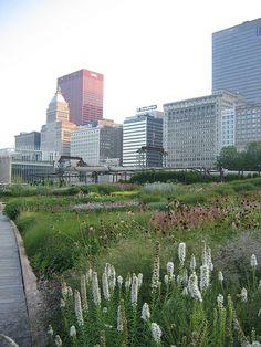 lurie garden / millennium park