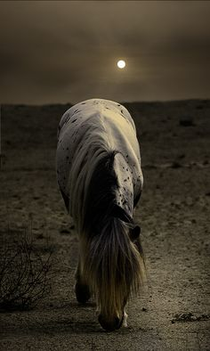 Grazing by moonlight