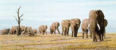 Simon Combes - The Last Elephants  (http://www.hiddenridgegallery.com/store/simon-combes/the-last-elephants.html) #art #simoncombes