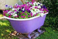 bathtub flower bed of wave petunias