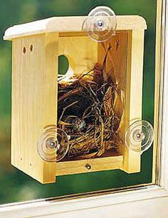 Backless bird house with suction cups for the window= you get to see the baby birds hatch.