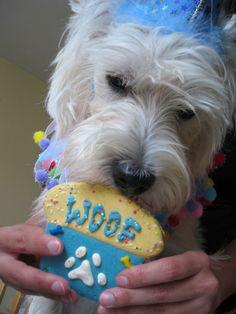 doggie birthday cookie
