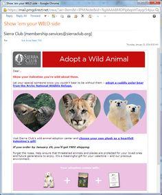 Sierra Club Valentine's gift catalog email message
