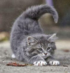 adorable kitten...stretch