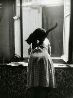 À la fenêtre (from Les chats de Willy Ronis, Paris, 1954).
