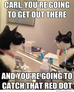 Because dammit Carl, you're good enough. funny animals, self motivation, funny pictures, funny cats, funni, pep talks, dots, animal memes, cat memes