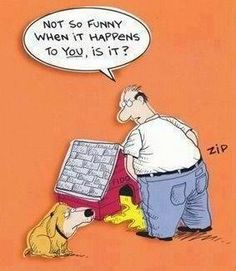 Doghouse payback