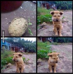 My puppy! He just want some honey and... poor guy!