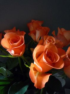 Gorgeous Apricot Roses