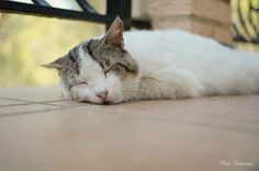 Feral cat =^. .^=