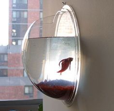every cube dweller should have one of these for flowers, fish, or other fun