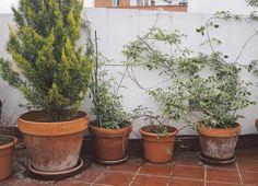 Seville, Spain: Day 4  |  The Fresh Exchange