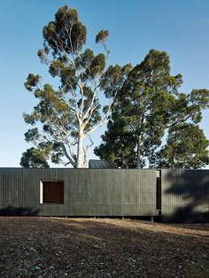 Karri Loop House by MORQ folds around three indigenous Australian trees australian tree, three indigen, houses, loop hous, morq fold, architectur, karri loop, trees, indigen australian