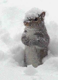 cute winter squirrel