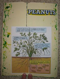 great peanut lapbook (with links) for George Washington Carver study