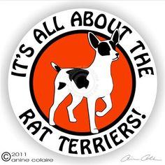 Sticker rascal rat, sticker, rat terriers