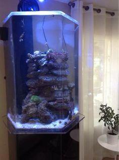 Craigslist on pinterest acrylics fish tanks and aquarium for 150 gallon fish tank for sale craigslist