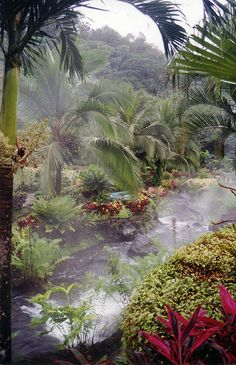 Steaming hot spring in the rainforest of Costa Rica