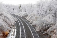 Trees bent by the weight of ice from a winter storm line railroad tracks in Hinsdale, Mass.