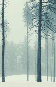 #winter #woods