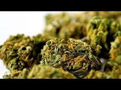 TV BREAKING NEWS Marijuana and AIDS - http://tvnews.me/marijuana-and-aids/