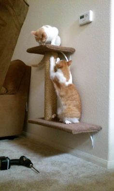 cat tree attached to wall with brackets