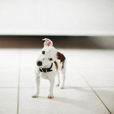 ♥ pocket puppy. cute!