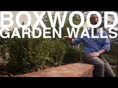 Use hedges to create beautiful walls in your garden landscape! P. Allen Smith recommends Boxwoods for any of your garden wall or ornamental hedge needs. Whether you want more privacy, a barrier to block areas such as driveways, or just an attractive border along pathways or retaining walls, Boxwoods are the perfect choice for a low-maintenance evergreen that will look great all year long! Boxwood Garden