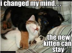 puppy and kitten love  The puppy's eyes are so adorable and the kitten is just sleeping away! Cuddly!
