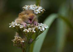 So cuteeee!