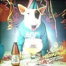 Spuds MacKenzie for Bud Light party animals, dogs, chocolates, bull terriers, parties, chocolate trifle, bud light, parti anim, spud mackenzi