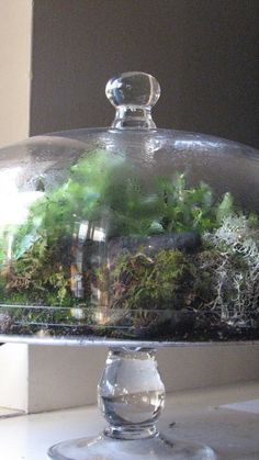 Bring spring indoors with a class on how to make great dish gardens, terrariums & Pot-et-Fleur!