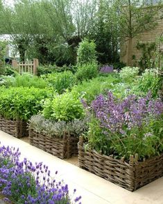 Container therapy at its best!! veggie garden contained in willow fencing that looks like baskets.
