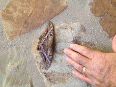 Really big moth