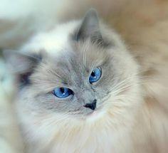 So pretty -look into my eyes
