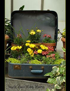 Suitcase container garden