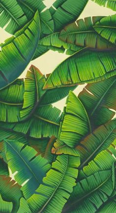 de Gournay hand painted wallpaper: Palms in Gaugain Colors