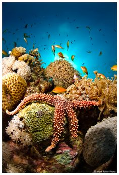 #starfish on #coral #reef