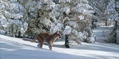 Simon Combes - Snow Tracker (http://www.hiddenridgegallery.com/store/simon-combes/snow-tracker.html) #art #simoncombes