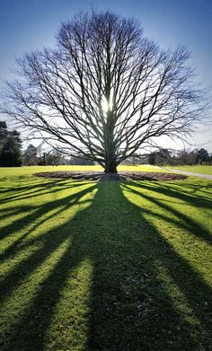 Tree at Kew (royal botanical) Gardens, London, England. Photo by Where the Art is via Londonist Flickrpool