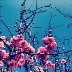 More springing spring forward